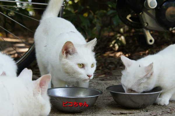 DSC06057 ピコちゃん.jpg