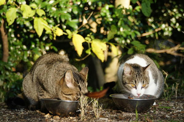 DSC07940 エリコの子猫 .jpg
